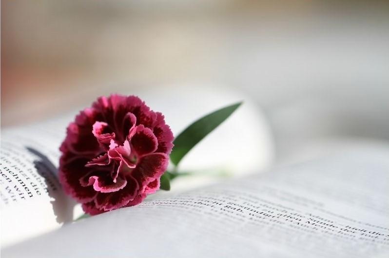 flower on scriptures
